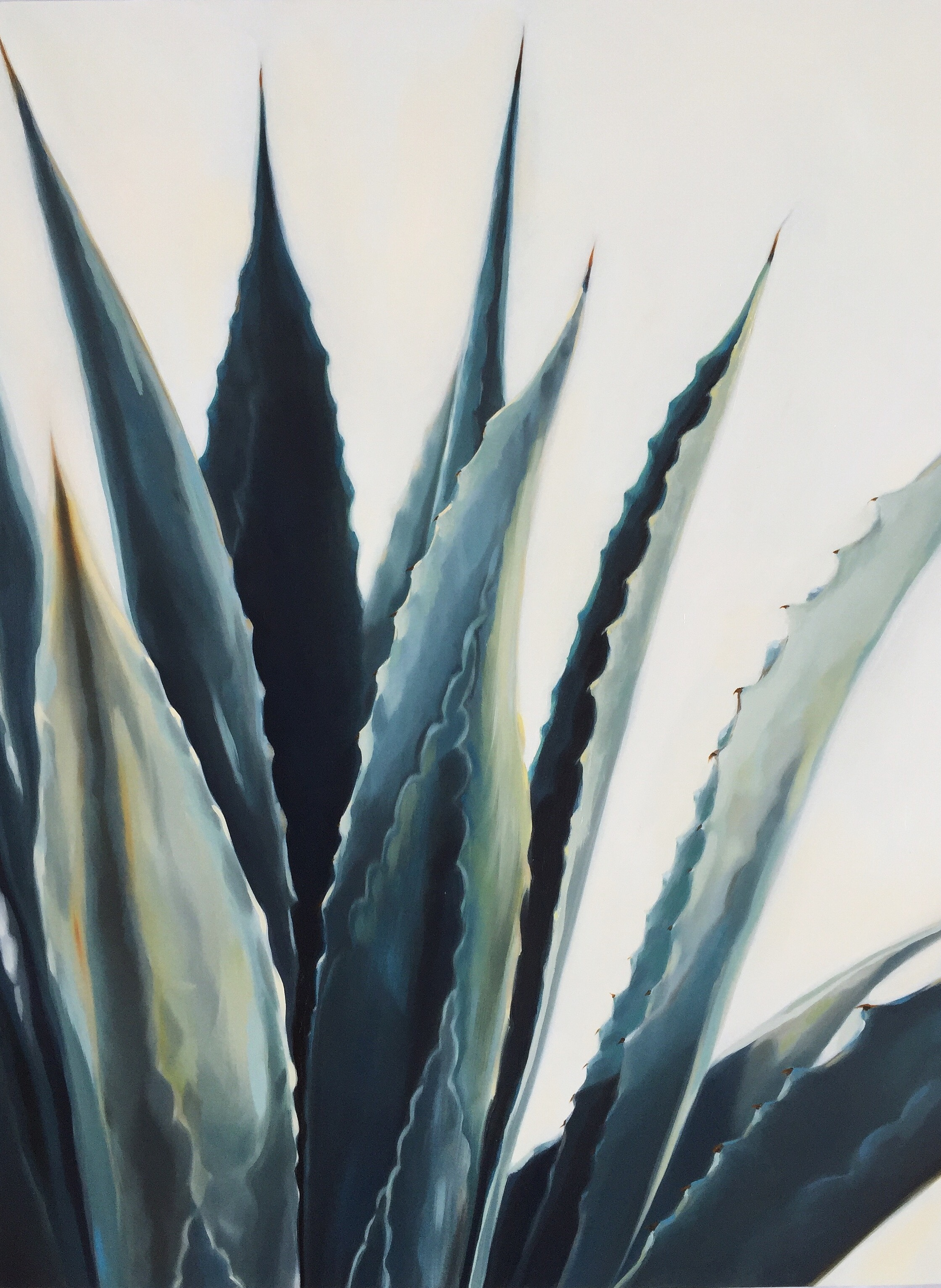 tall agave 24 x 24 inches