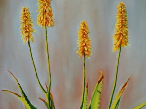 aloes-in-bloom